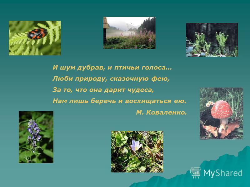 И шум дубрав, и птичьи голоса… Люби природу, сказочную фею, За то, что она дарит чудеса, Нам лишь беречь и восхищаться ею. М. Коваленко.