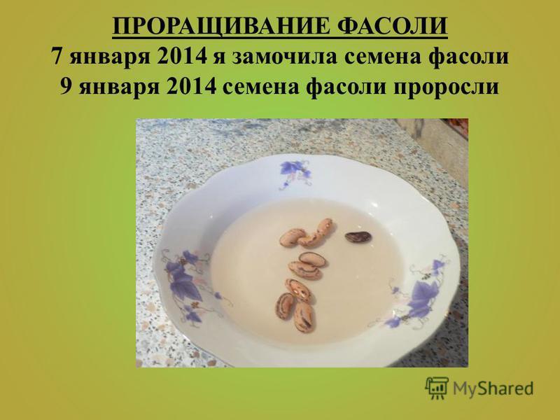 ПРОРАЩИВАНИЕ ФАСОЛИ 7 января 2014 я замочила семена фасоли 9 января 2014 семена фасоли проросли