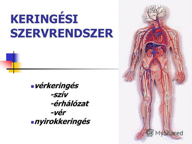 1 KERINGÉSI SZERVRENDSZER vérkeringés -szív -érhálózat -vér nyirokkeringés