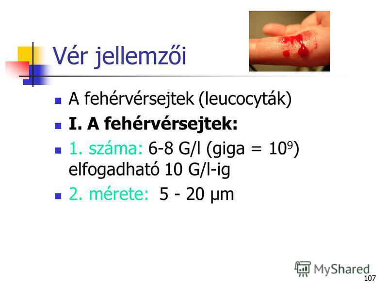 107 Vér jellemzői A fehérvérsejtek (leucocyták) I. A fehérvérsejtek: 1. száma: 6 8 G/l (giga = 10 9 ) elfogadható 10 G/l ig 2. mérete: 5 - 20 µm