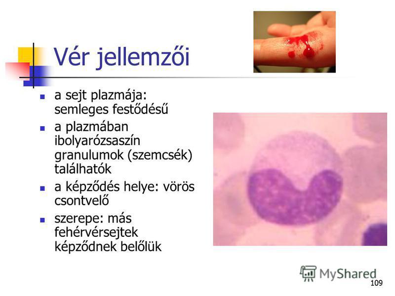 109 Vér jellemzői a sejt plazmája: semleges festődésű a plazmában ibolyarózsaszín granulumok (szemcsék) találhatók a képződés helye: vörös csontvelő szerepe: más fehérvérsejtek képződnek belőlük