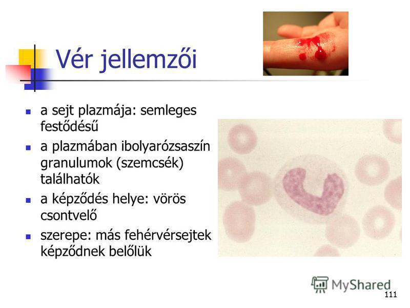 111 Vér jellemzői a sejt plazmája: semleges festődésű a plazmában ibolyarózsaszín granulumok (szemcsék) találhatók a képződés helye: vörös csontvelő szerepe: más fehérvérsejtek képződnek belőlük