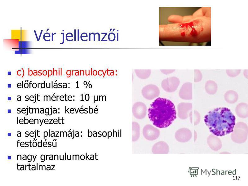 117 Vér jellemzői c) basophil granulocyta: előfordulása: 1 % a sejt mérete: 10 µm sejtmagja: kevésbé lebenyezett a sejt plazmája: basophil festődésű nagy granulumokat tartalmaz