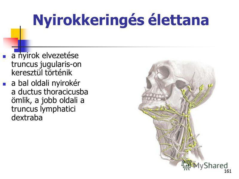 161 Nyirokkeringés élettana a nyirok elvezetése truncus jugularis-on keresztül történik a bal oldali nyirokér a ductus thoracicusba ömlik, a jobb oldali a truncus lymphatici dextraba