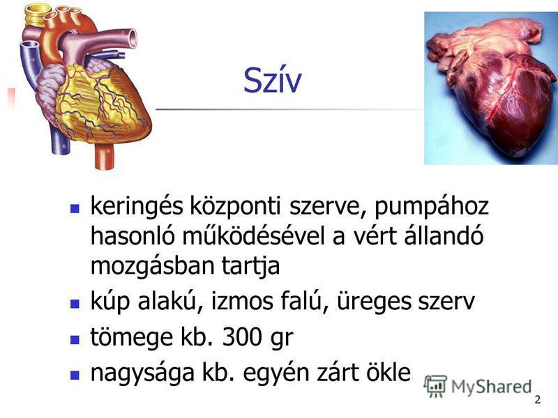 2 Szív keringés központi szerve, pumpához hasonló működésével a vért állandó mozgásban tartja kúp alakú, izmos falú, üreges szerv tömege kb. 300 gr nagysága kb. egyén zárt ökle