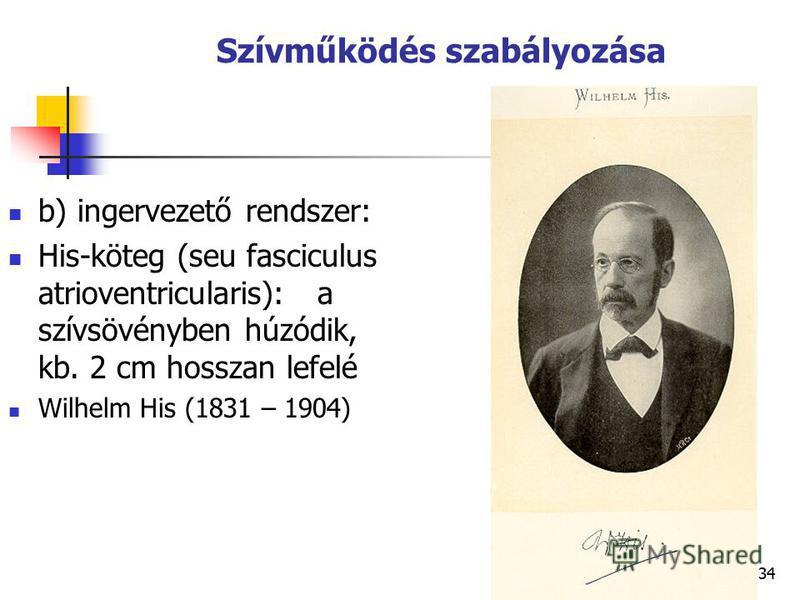 34 Szívműködés szabályozása b) ingervezető rendszer: His-köteg (seu fasciculus atrioventricularis): a szívsövényben húzódik, kb. 2 cm hosszan lefelé Wilhelm His (1831 – 1904)