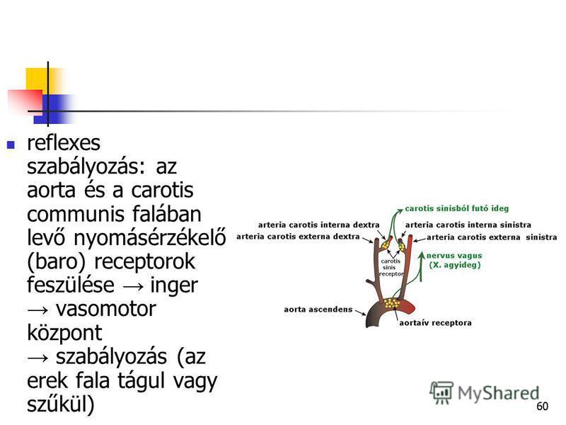 60 reflexes szabályozás: az aorta és a carotis communis falában levő nyomásérzékelő (baro) receptorok feszülése inger vasomotor központ szabályozás (az erek fala tágul vagy szűkül)