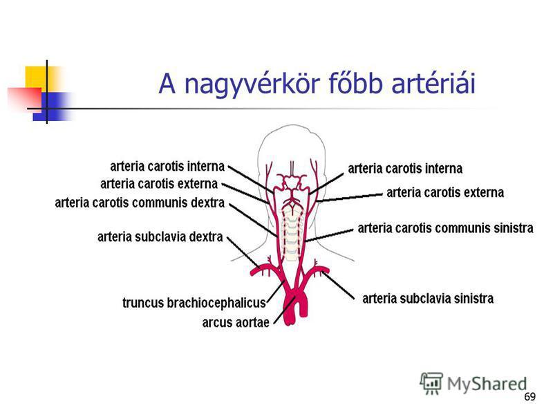 69 A nagyvérkör főbb artériái
