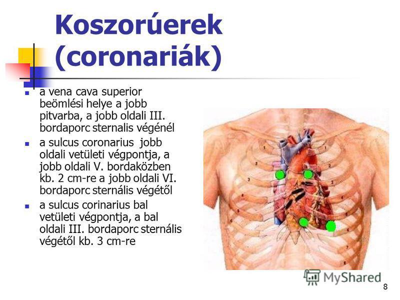 8 Koszorúerek (coronariák) a vena cava superior beömlési helye a jobb pitvarba, a jobb oldali III. bordaporc sternalis végénél a sulcus coronarius jobb oldali vetületi végpontja, a jobb oldali V. bordaközben kb. 2 cm-re a jobb oldali VI. bordaporc st