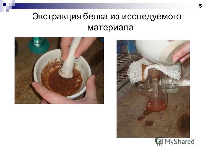 Экстракция белка из исследуемого материала 5