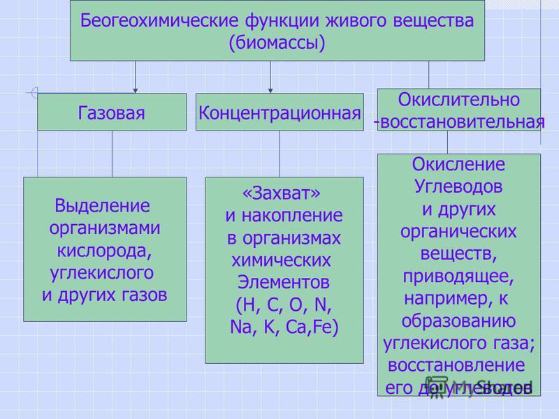 Беогеохимические функции живого вещества (биомассы) Газовая Концентрационная Окислительно -восстановительная Выделение организмами кислорода, углекислого и других газов «Захват» и накопление в организмах химических Элементов (Н, С, О, N, Na, K, Ca,Fe
