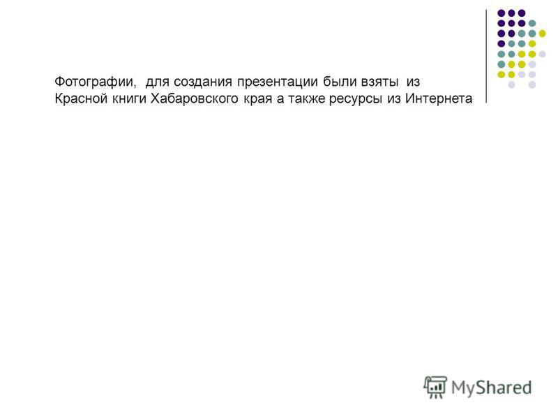 Фотографии, для создания презентации были взяты из Красной книги Хабаровского края а также ресурсы из Интернета