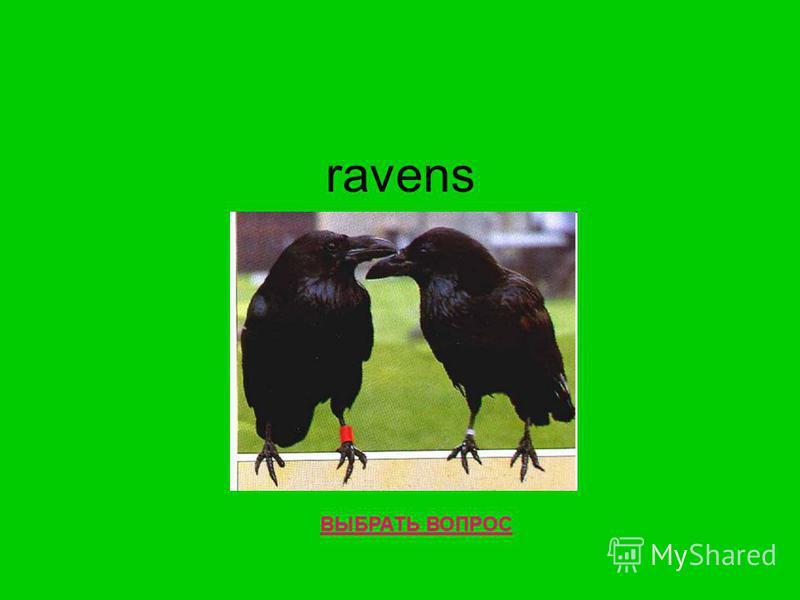 ravens ВЫБРАТЬ ВОПРОС
