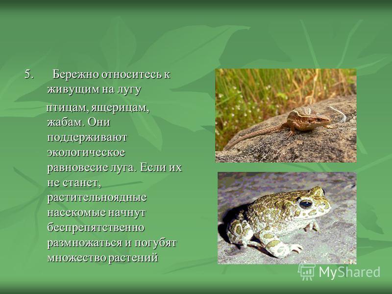 5. Бережно относитесь к живущим на лугу 5. Бережно относитесь к живущим на лугу птицам, ящерицам, жабам. Они поддерживают экологическое равновесие луга. Если их не станет, растительноядные насекомые начнут беспрепятственно размножаться и погубят множ