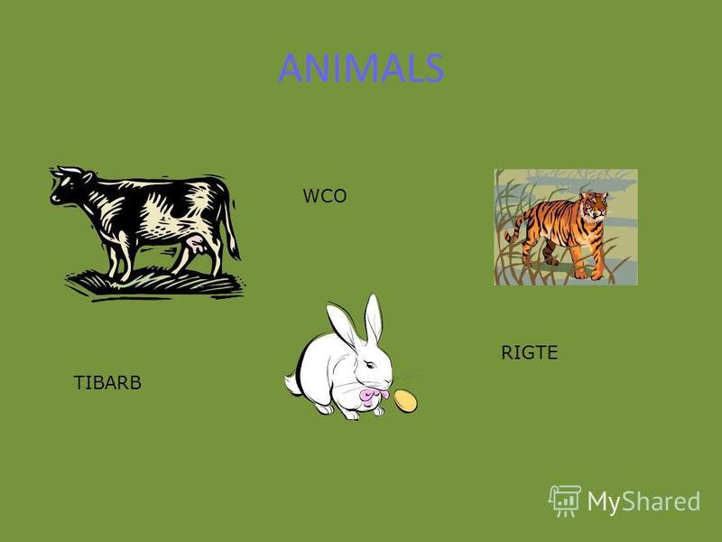 ANIMALS TIBARB WCO RIGTE