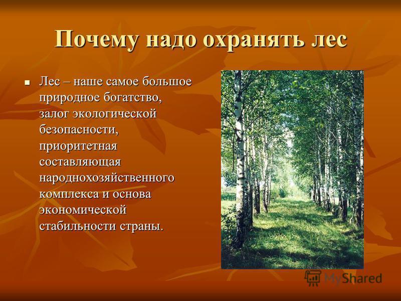 Зачем нужно сажать леса 82