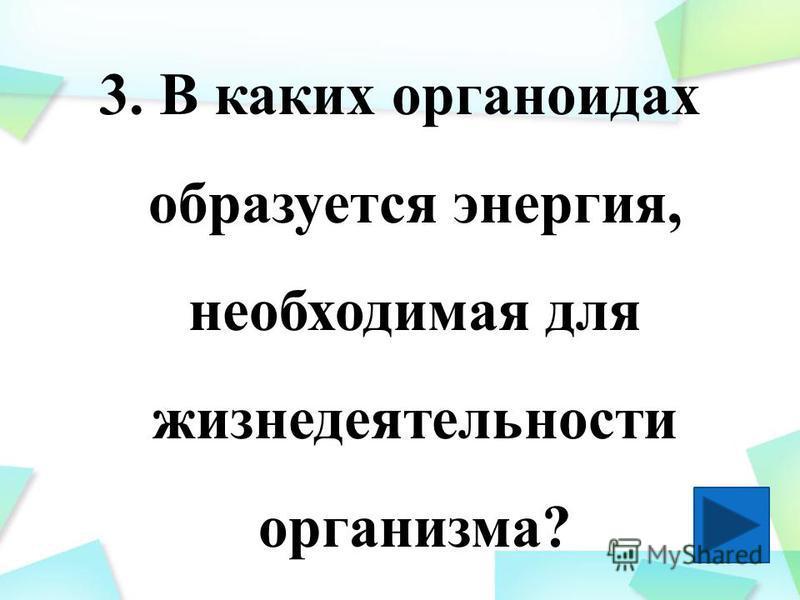 3. В каких органоидах образуется энергия, необходимая для жизнедеятельности организма?