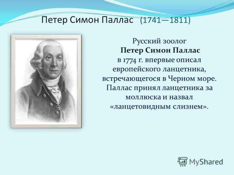 Петер Симон Паллас (17411811) Русский зоолог Петер Симон Паллас в 1774 г. впервые описал европейского ланцетника, встречающегося в Черном море. Паллас принял ланцетника за моллюска и назвал «ланцетовидным слизнем».