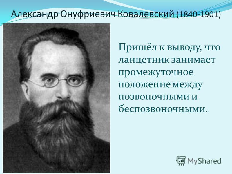 Александр Онуфриевич Ковалевский (1840-1901) Пришёл к выводу, что ланцетник занимает промежуточное положение между позвоночными и беспозвоночными.