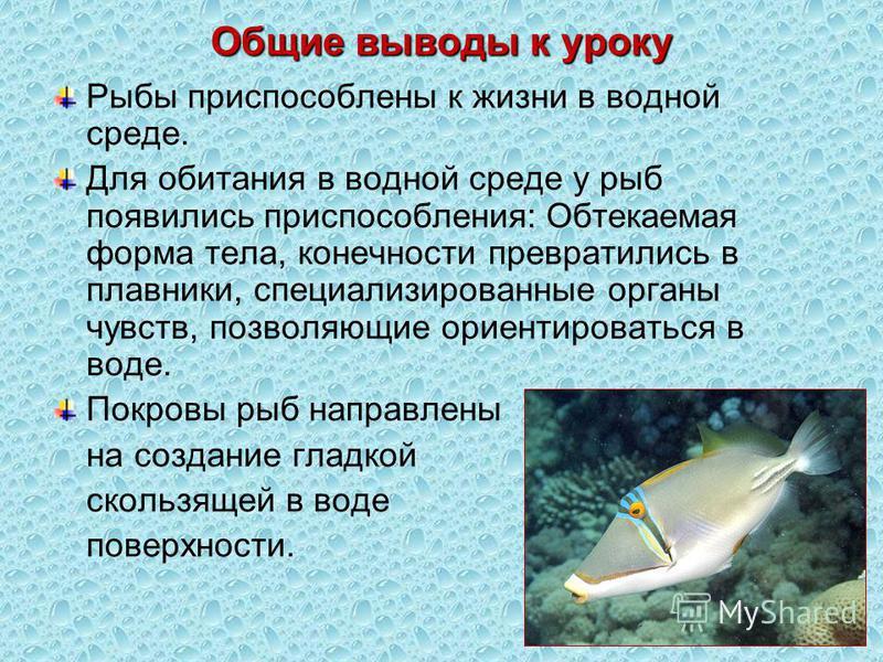 Общие выводы к уроку Рыбы приспособлены к жизни в водной среде. Для обитания в водной среде у рыб появились приспособления: Обтекаемая форма тела, конечности превратились в плавники, специализированные органы чувств, позволяющие ориентироваться в вод