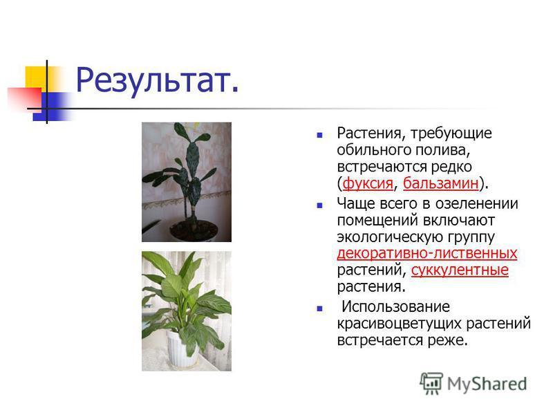Результат. Растения, требующие обильного полива, встречаются редко (фуксия, бальзамин).фуксия бальзамин Чаще всего в озеленении помещений включают экологическую группу декоративно-лиственных растений, суккулентные растения. декоративно-лиственных сук