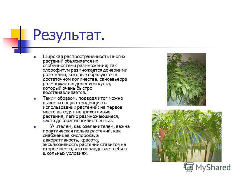 Результат. Широкая распространенность многих растений объясняется их особенностями размножения; так хлорофитум размножается дочерними розетками, которые образуются в достаточном количестве, сансевьерра размножается делением куста, который очень быстр