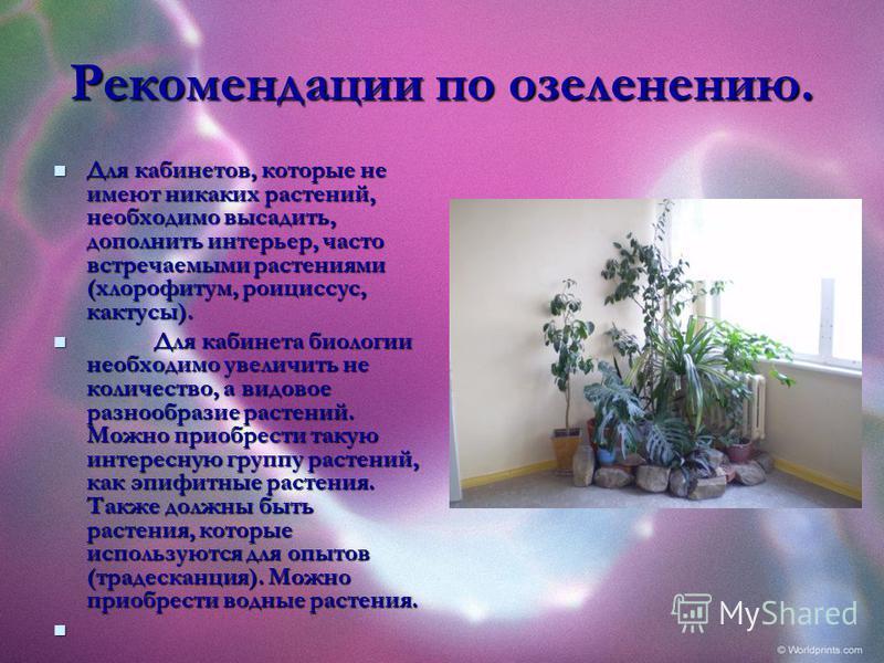 Рекомендации по озеленению. Для кабинетов, которые не имеют никаких растений, необходимо высадить, дополнить интерьер, часто встречаемыми растениями (хлорофитум, роициссус, кактусы). Для кабинетов, которые не имеют никаких растений, необходимо высади