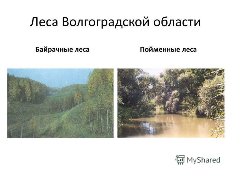 Леса Волгоградской области Байрачные леса Пойменные леса