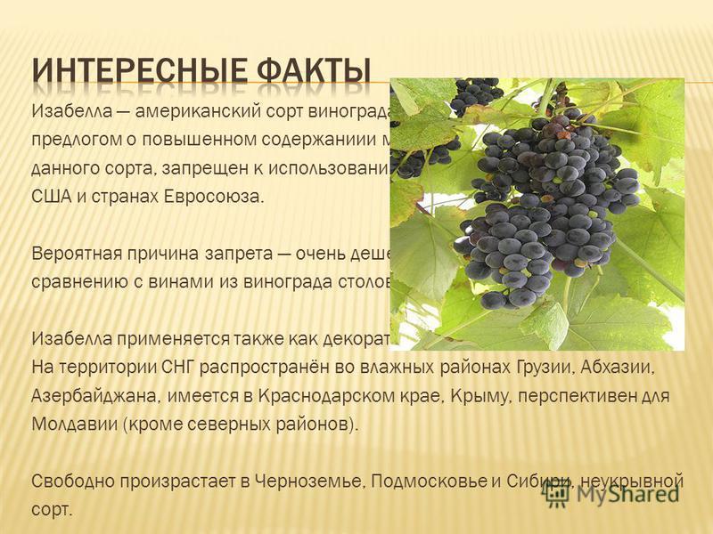 Изабелла американский сорт винограда. В последнее время, под предлогом о повышенном содержании и метанола в винах, получаемых из данного сорта, запрещен к использованию в коммерческом виноделии в США и странах Евросоюза. Вероятная причина запрета оче