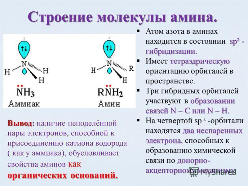 Строение молекулы амина. Вывод: органических оснований. Вывод: наличие неподелённой пары электронов, способной к присоединению катиона водорода ( как у аммиака), обусловливает свойства аминов как органических оснований.