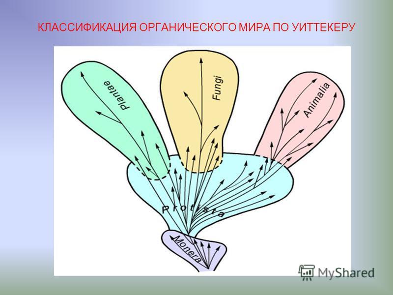 КЛАССИФИКАЦИЯ ОРГАНИЧЕСКОГО МИРА ПО УИТТЕКЕРУ