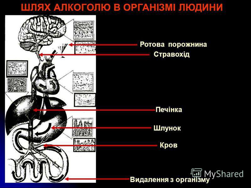 Алкоголь ШЛЯХ АЛКОГОЛЮ В ОРГАНІЗМІ ЛЮДИНИ Ротова порожнина Стравохід Шлунок Кров Печінка Видалення з організму
