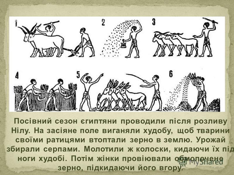 Посівний сезон єгиптяни проводили після розливу Нілу. На засіяне поле виганяли худобу, щоб тварини своїми ратицями втоптали зерно в землю. Урожай збирали серпами. Молотили ж колоски, кидаючи їх під ноги худобі. Потім жінки провіювали обмолочене зерно