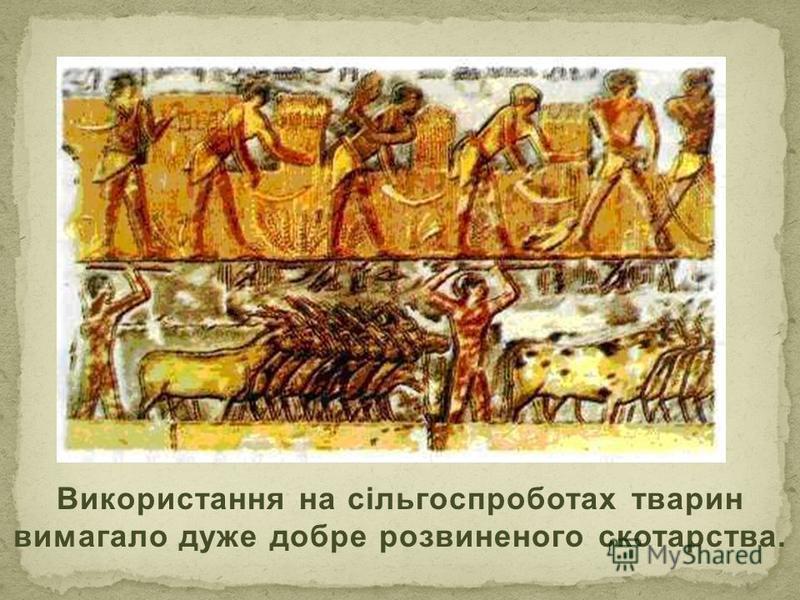 Використання на сільгоспроботах тварин вимагало дуже добре розвиненого скотарства.