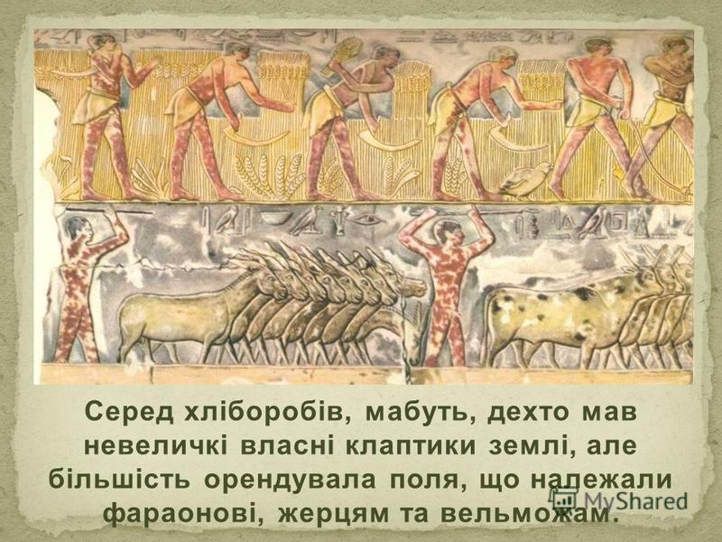 Серед хліборобів, мабуть, дехто мав невеличкі власні клаптики землі, але більшість орендувала поля, що належали фараонові, жерцям та вельможам.