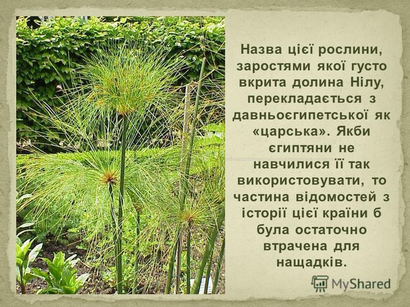 Назва цієї рослини, заростями якої густо вкрита долина Нілу, перекладається з давньоєгипетської як «царська». Якби єгиптяни не навчилися її так використовувати, то частина відомостей з історії цієї країни б була остаточно втрачена для нащадків.