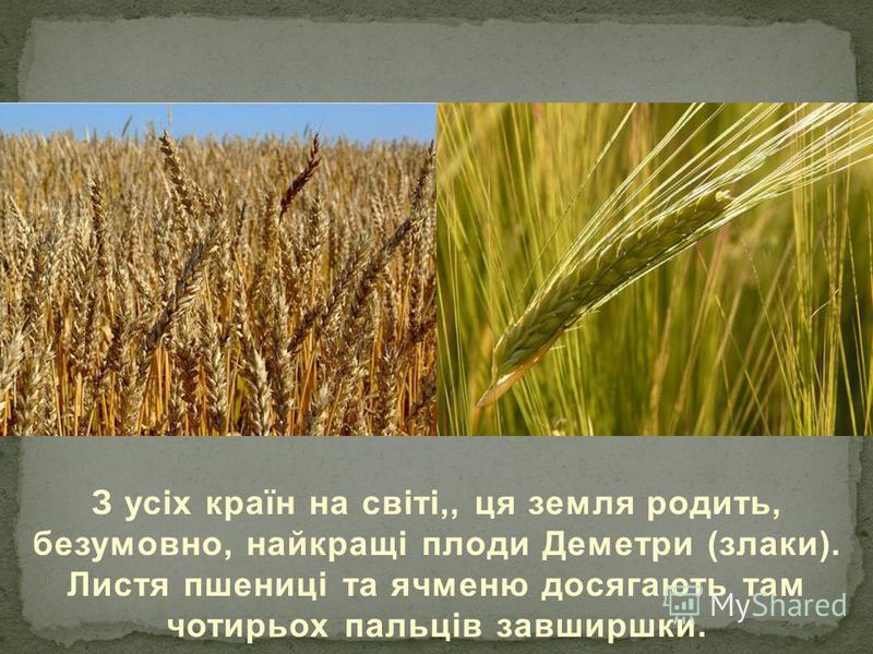 З усіх країн на світі,, ця земля родить, безумовно, найкращі плоди Деметри (злаки). Листя пшениці та ячменю досягають там чотирьох пальців завширшки.