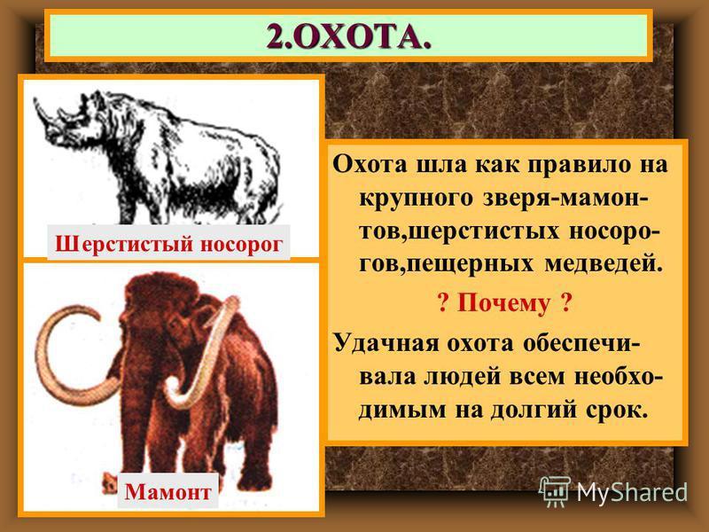Охота шла как правило на крупного зверя-мамонтов,шерстистых носорогов,пещерных медведей. ? Почему ? Удачная охота обеспечивала людей всем необходимым на долгий срок. 2.ОХОТА. Шерстистый носорог Мамонт