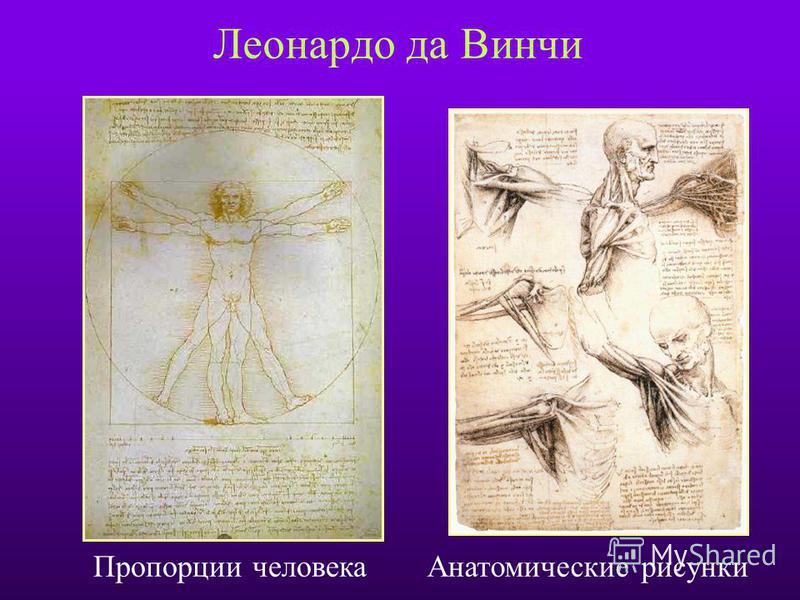 Леонардо да Винчи Пропорции человека Анатомические рисунки