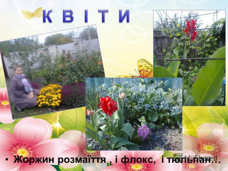 Жоржин розмаїття, і флокс, і тюльпан…