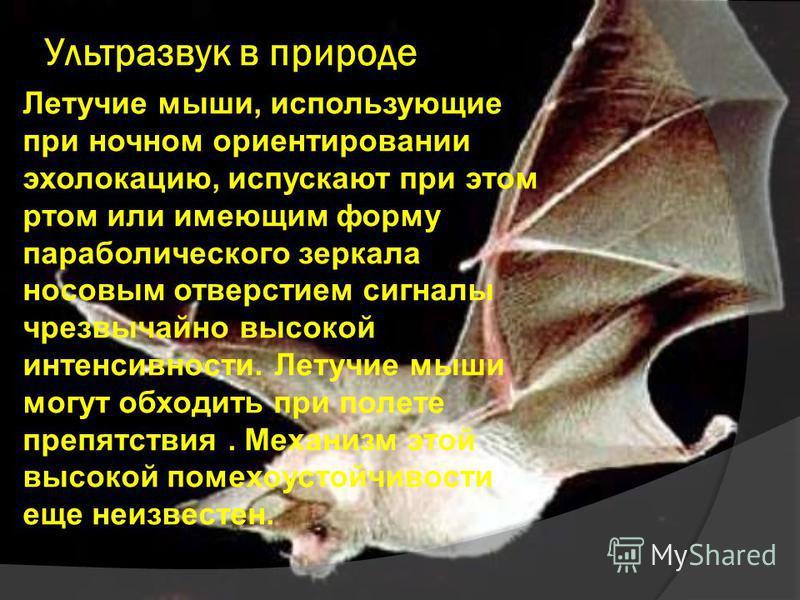 Летучие мыши, использующие при ночном ориентировании эхолокацию, испускают при этом ртом или имеющим форму параболического зеркала носовым отверстием сигналы чрезвычайно высокой интенсивности. Летучие мыши могут обходить при полете препятствия. Механ