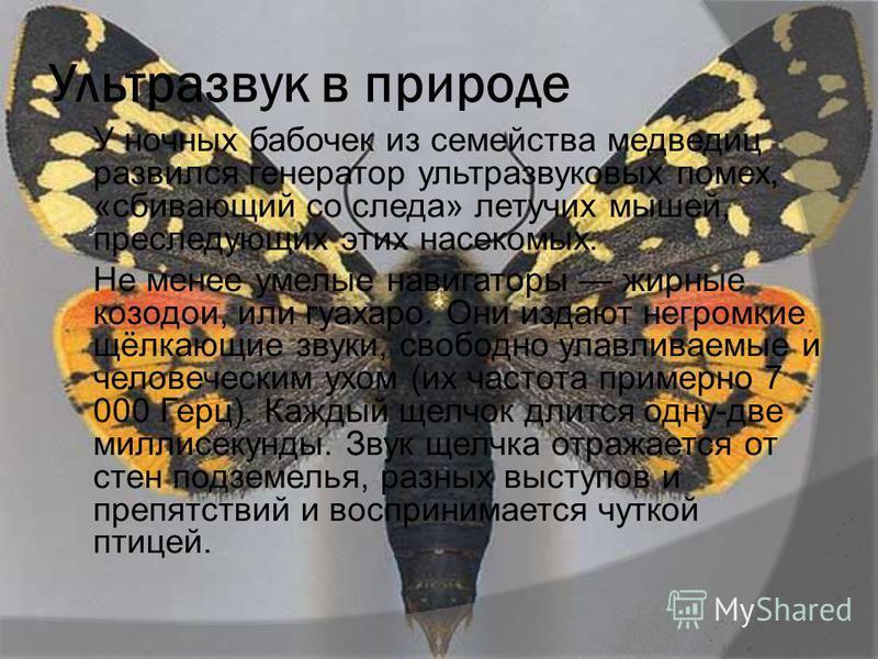 Ультразвук в природе У ночных бабочек из семейства медведиц развился генератор ультразвуковых помех, «сбивающий со следа» летучих мышей, преследующих этих насекомых. Не менее умелые навигаторы жирные козодои, или гуахаро. Они издают негромкие щёлкающ