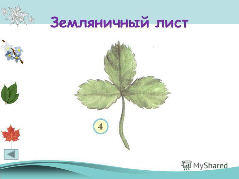 Земляничный лист