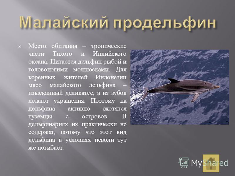 Место обитания – тропические части Тихого и Индийского океана. Питается дельфин рыбой и головоногими моллюсками. Для коренных жителей Индонезии мясо малайского дельфина – изысканный деликатес, а из зубов делают украшения. Поэтому на дельфина активно