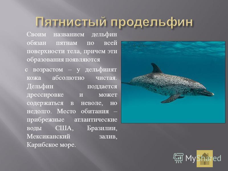 Своим названием дельфин обязан пятнам по всей поверхности тела, причем эти образования появляются с возрастом – у дельфинят кожа абсолютно чистая. Дельфин поддается дрессировке и может содержаться в неволе, но недолго. Место обитания – прибрежные атл