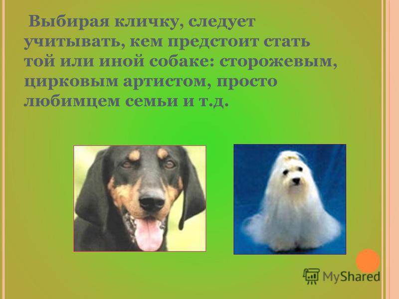 Выбирая кличку, следует учитывать, кем предстоит стать той или иной собаке: сторожевым, цирковым артистом, просто любимцем семьи и т.д.