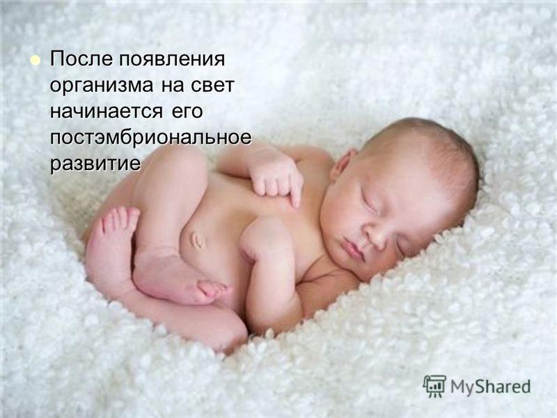 После появления организма на свет начинается его постэмбриональное развитие После появления организма на свет начинается его постэмбриональное развитие