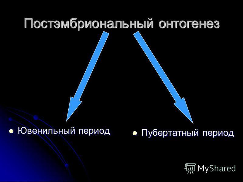 Постэмбриональный онтогенез Ювенильный период Ювенильный период Пубертатный период Пубертатный период