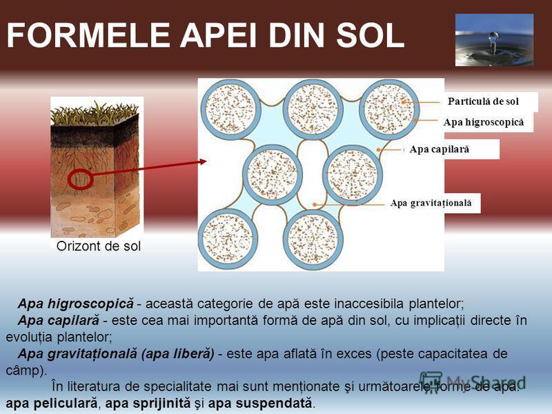 FORMELE APEI DIN SOL Particulă de sol Apa higroscopică Apa capilară Apa gravitaţională Apa higroscopică - această categorie de apă este inaccesibila plantelor; Apa capilară - este cea mai importantă formă de apă din sol, cu implicaţii directe în evol