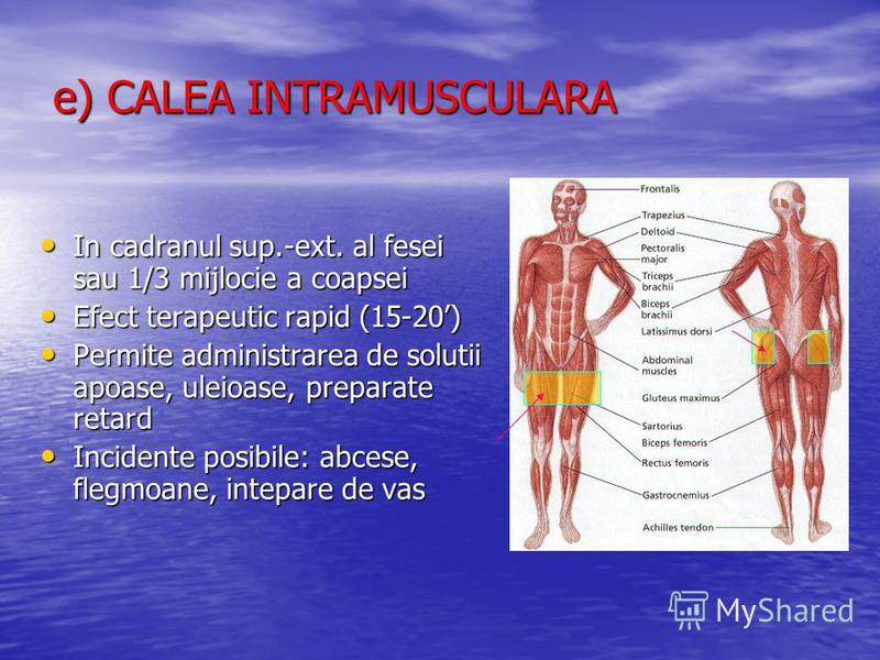 e) CALEA INTRAMUSCULARA In cadranul sup.-ext. al fesei sau 1/3 mijlocie a coapsei In cadranul sup.-ext. al fesei sau 1/3 mijlocie a coapsei Efect terapeutic rapid (15-20) Efect terapeutic rapid (15-20) Permite administrarea de solutii apoase, uleioas